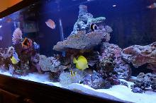 125 Gallon Display Tank Thumbnail