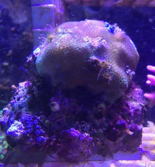 Aquaticlog Stock By Jayarcher Added Christmas Tree Worm Rock