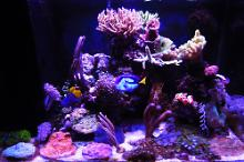 Mocchaccino's Mixed Community Reef Thumbnail