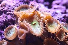 Zoas that appeared on the rock