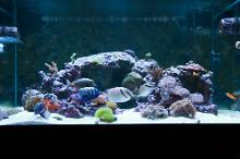 Matt's Display Tank Thumbnail