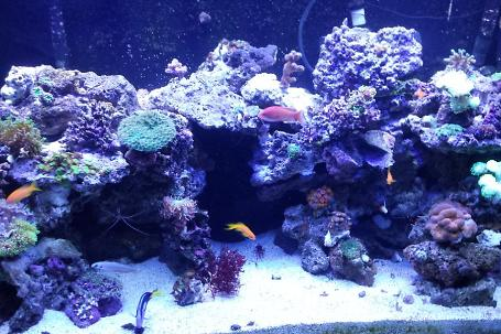 240 gallon acrylic mixed reef Thumbnail
