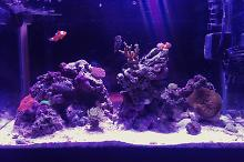 10 gallon mixed reef Thumbnail