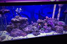 75g Reef Overhaul Thumbnail