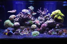John's Mixed Reef Tank Thumbnail