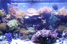 90 gal mixed reef Thumbnail