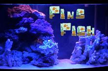Fin's and Corals Thumbnail