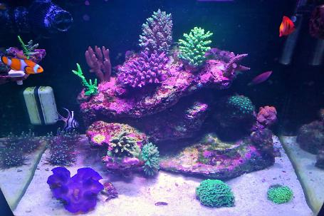 My First Reef Thumbnail