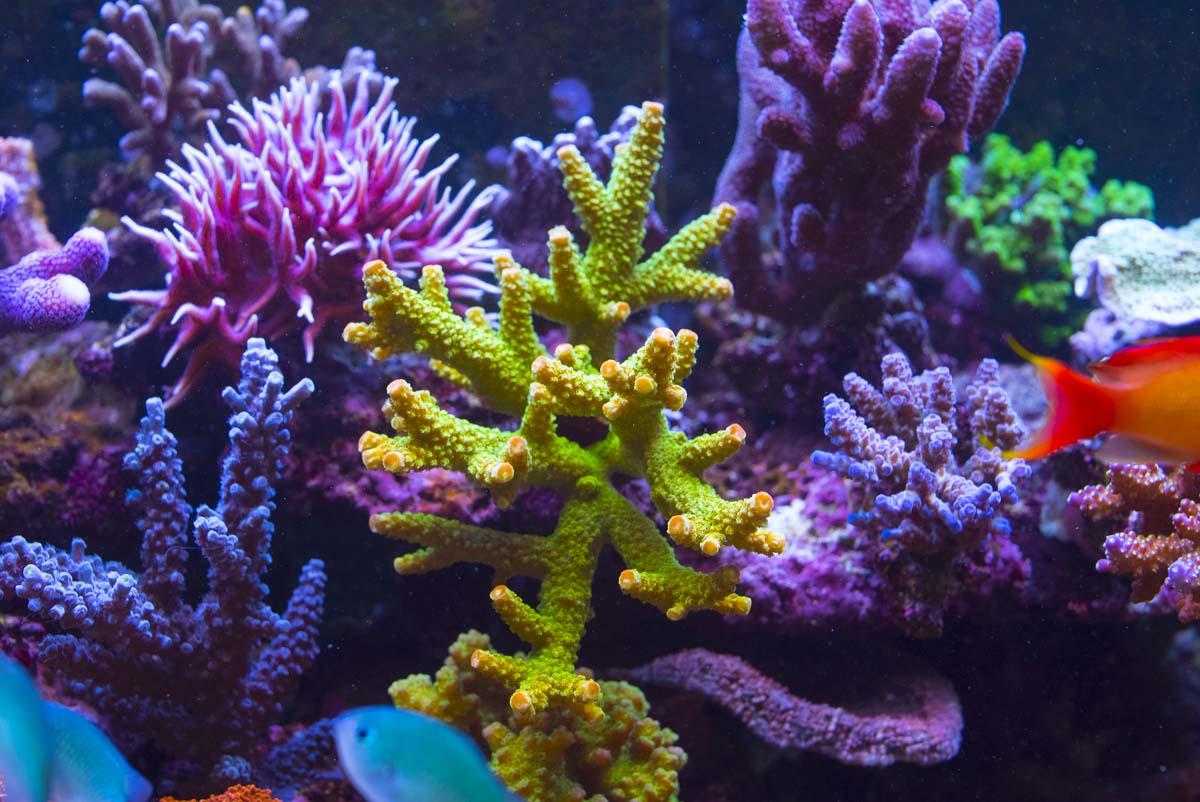 AquaticLog stock by shardy: Added Bali Green Slimer ...