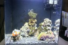 8 Gallon Reef Thumbnail