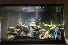 29 Gallon Freshwater aquarium Thumbnail