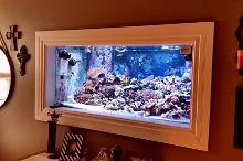 250 Gallon In-Wall Reef Thumbnail