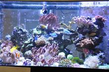 Main Display tank - AquaMedic Thumbnail