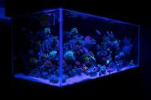 Duckhams 75 Gallon Reef Thumbnail