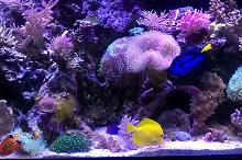 90 Gallon Mixed Reef Thumbnail