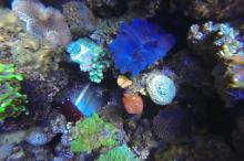 Elliot's Mixed Reef Thumbnail