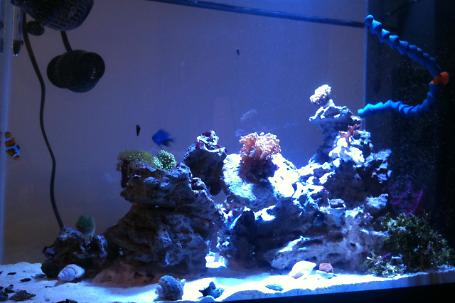 20G AIO Mixed Reef Thumbnail