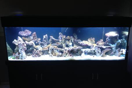 original aquascape during cycling 2
