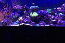 Jpag13 55 gallon reef tank  Thumbnail