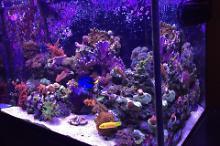 Lee's 65g Mixed Reef Thumbnail
