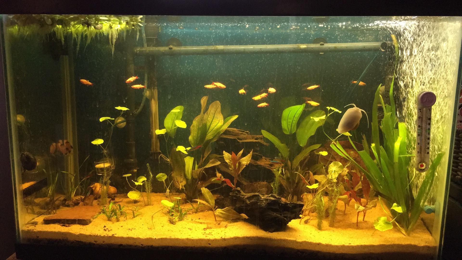Dupee419 S Amazon Blackwater Aquarium