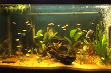 Amazon Blackwater Aquarium  Thumbnail