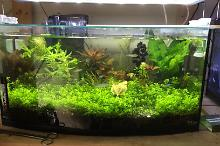 50 L Curved front Thumbnail