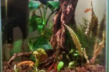 10L office Tank Thumbnail