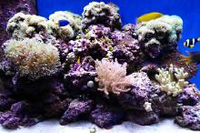 65 gallon Reef Thumbnail