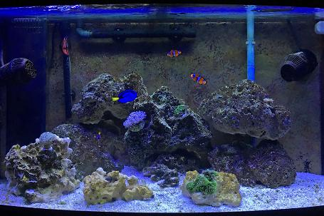 46 gallon bow front Thumbnail
