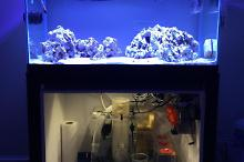 My Aquarium on November 12, 2016