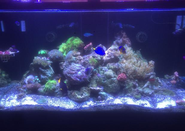 My Aquarium on December 19, 2016