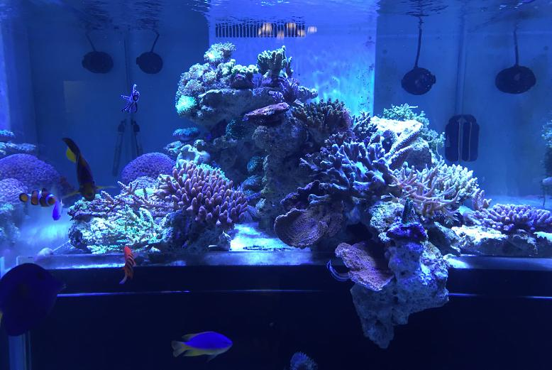 My Aquarium on Dec 30, 2016