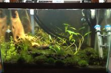 Shrimp Aquarium Thumbnail