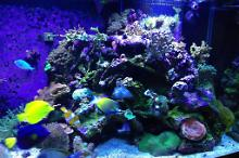 180 Gallon Mixed Reef Thumbnail