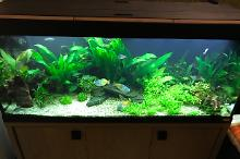 My Aquarium on Jan 21, 2017