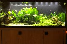 My Aquarium on Jan 25, 2017