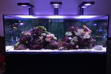 My Aquarium on February 1, 2017