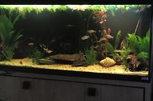 My Aquarium on Feb 12, 2017