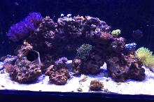 65 Gallon Red Sea on Feb 12, 2017