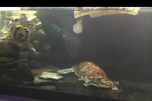 Turtle Tank on Feb 13, 2017