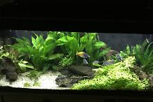 My Aquarium on Feb 17, 2017
