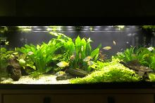 My Aquarium on Feb 20, 2017