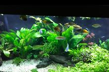 My Aquarium on Mar 2, 2017