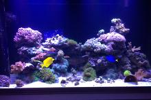 Mixed reef 90 gallons Thumbnail