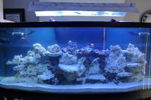 170 Gallon Reef on March 8, 2017