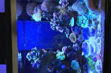 Oceanic 40 Gallon Reef Thumbnail