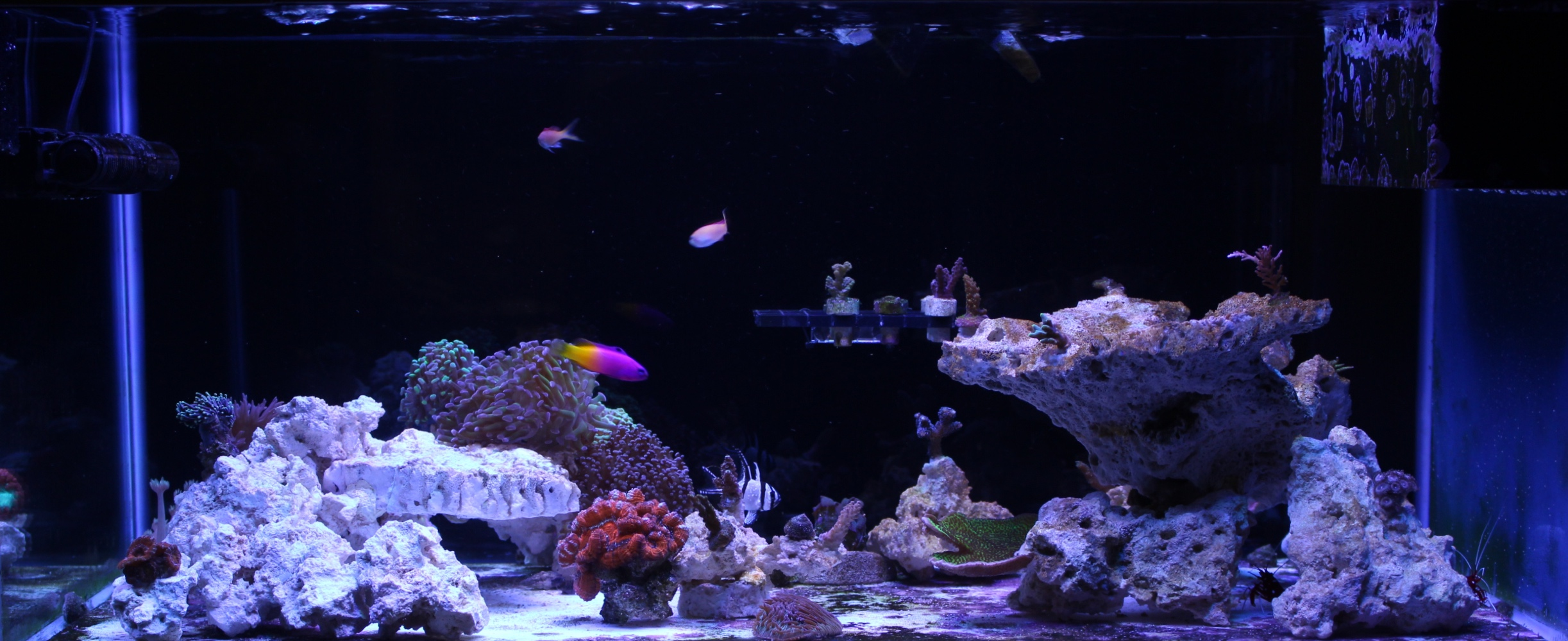 FTS March 19, 2017 (New Scape)