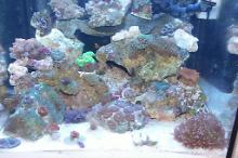 Our Little Reef Tank Thumbnail