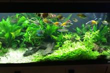 My Aquarium on Mar 21, 2017